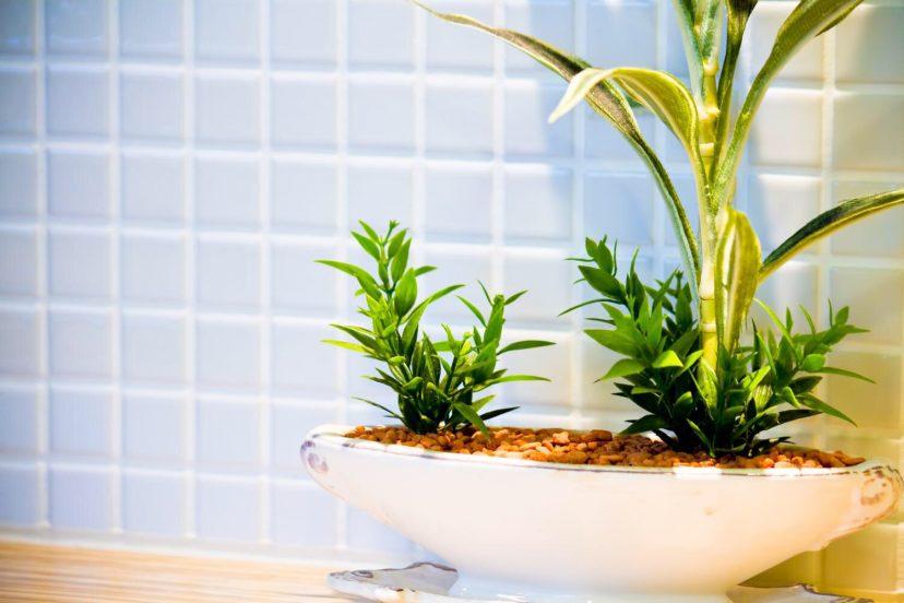 [C]大阪で安くておしゃれな観葉植物を売っているオススメのお店4選