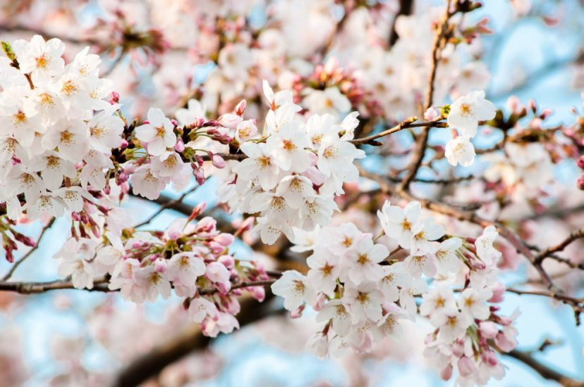 [C]大阪市内でバーベキューBBQができるお花見スポット(穴場含む) 2017年バージョン