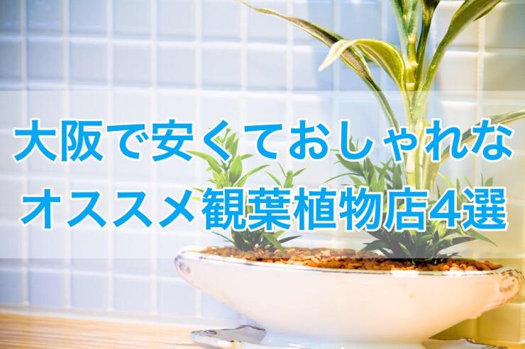大阪で安くておしゃれな観葉植物を売っているおすすめショップ4選