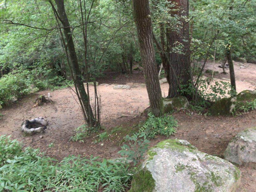 自然の森ファミリーオートキャンプ場の林間サイト