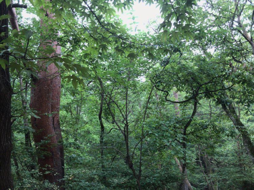 自然の森ファミリーオートキャンプ場は涼しい