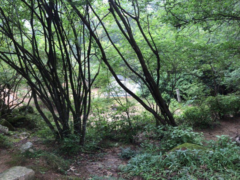 自然の森ファミリーオートキャンプ場のオートサイト